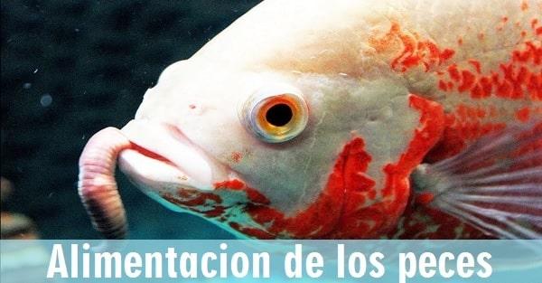 que comen los peces