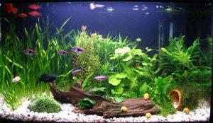 cuanto puede aguantar los peces sin comer